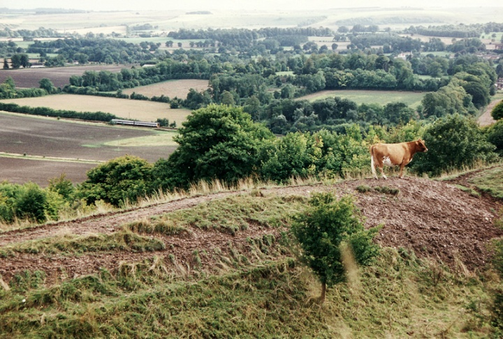 The view from Battlesbury Hill - A cow stands atop the Iron Age earthwork and admires the view across the valley of the River Wylye toward Cow Down on the far horizon.  The eagle eyed will spot a train below on the Westbury - Salisbury line.